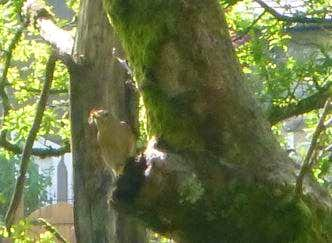 We spot a Spotted Flycatcher, can you?