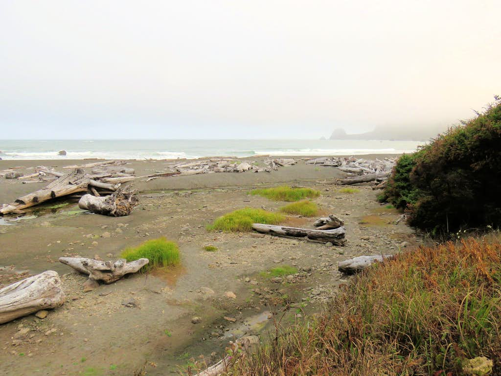 Near Lagoon Creek trailhead