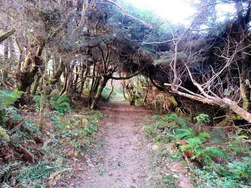 Trail near Hidden Beach