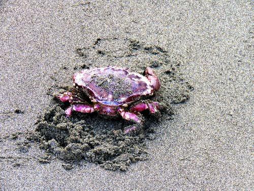 Crab on Hidden Beach