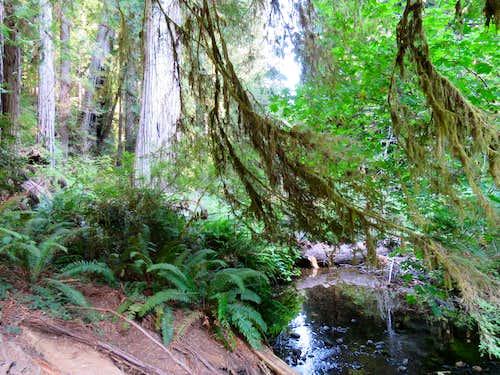 On Prairie Creek Trail
