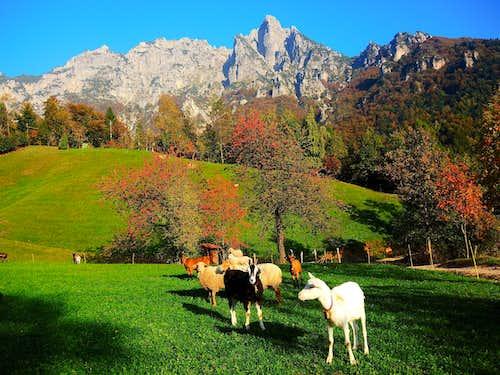 Autumn colors in Valle Agno di Lora