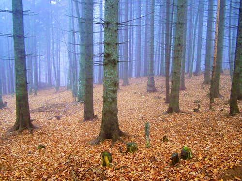 Autumn forest in low clouds