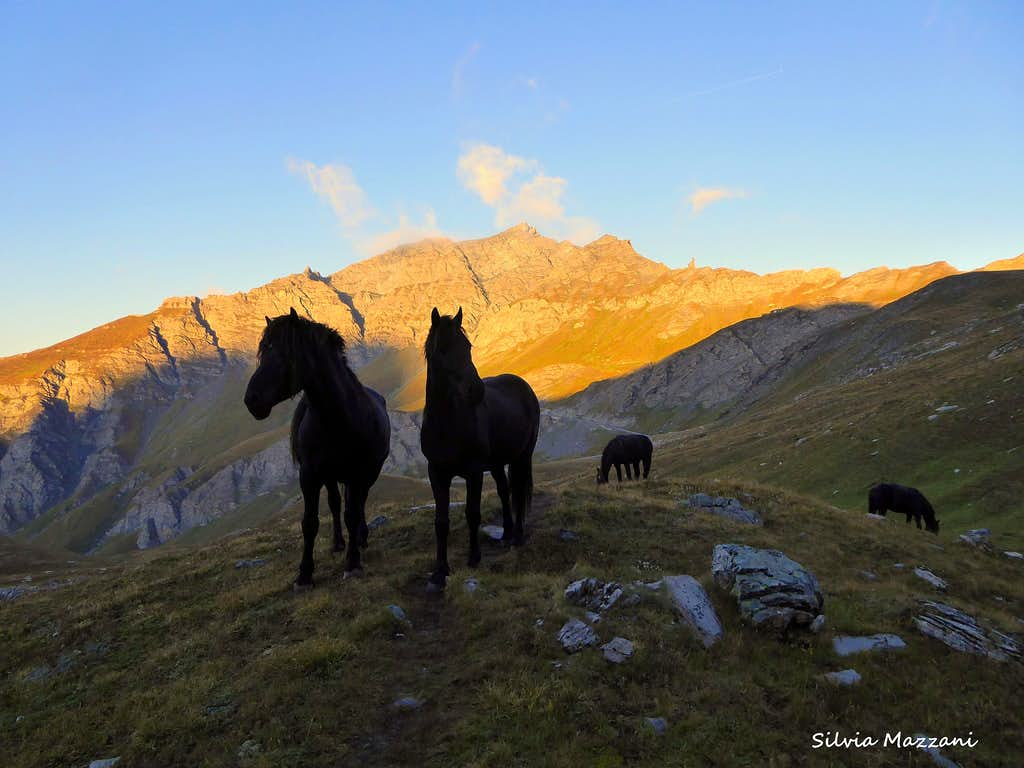 Black horses at sunrise along the trail to Col d'Asti