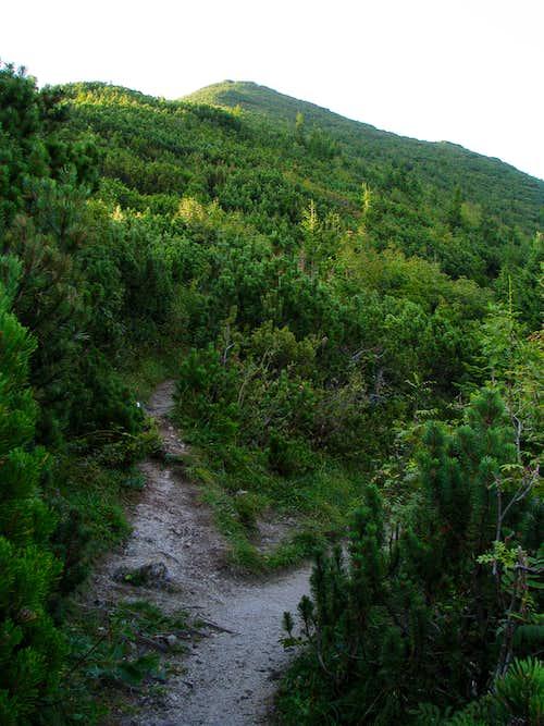 Fork in path on Ostrá