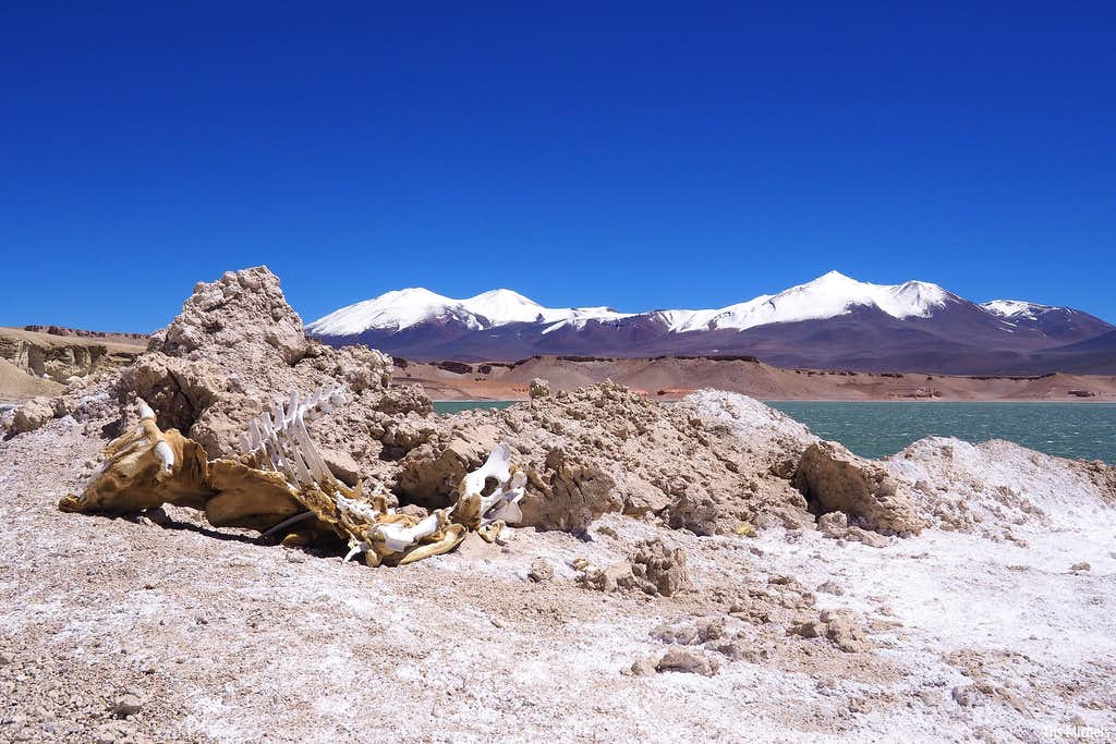 Cow skeleton before Pena Blanca (6030m) and El Ermitano (6146m)