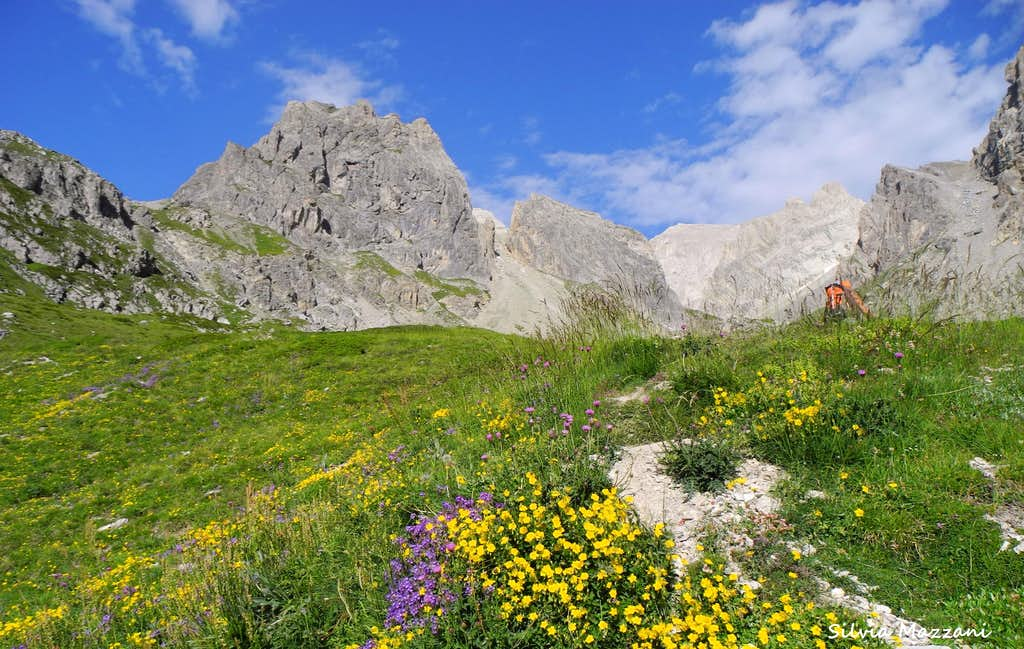 August blooming in the Cerces Massif