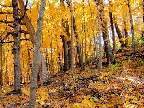 Autumn Gold on the slopes of Mt. Yeager