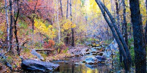 Little Elk Creek Autumn Closeup