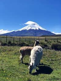 View of Cotopaxi from the valley after a successful summit bid.