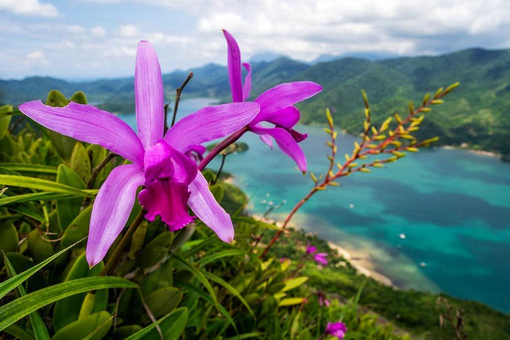 orchids and bromeliads - saco do mamanguá/RJ