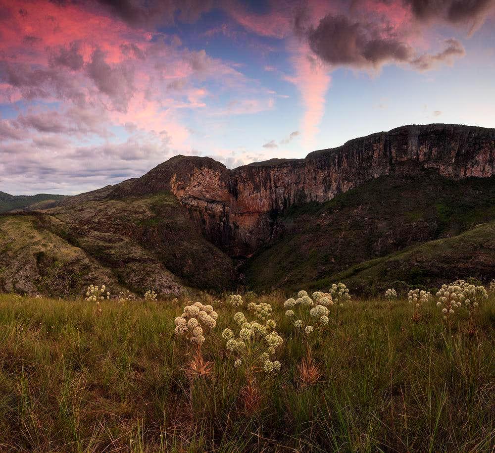 Actinocephalus polyanthus and the tabuleiro waterfall - serra do intendente state park/MG