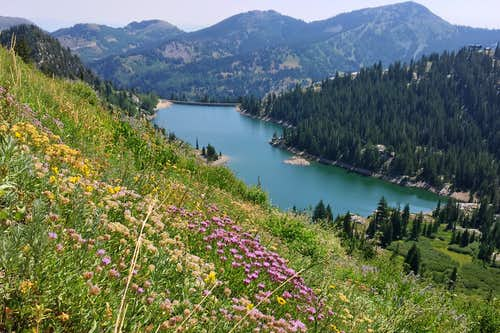 Wildflowers over Twin Lakes Reservoir