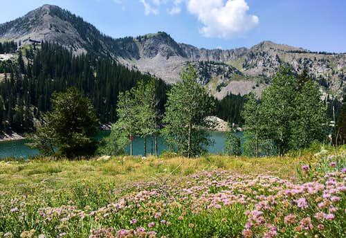 Twin Lakes Reservoir wildflowers
