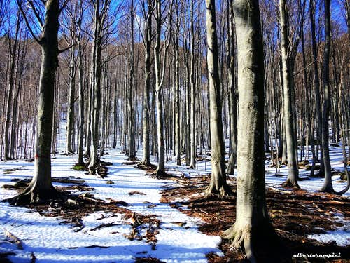 Beech wood on the route to Monte Bragalata