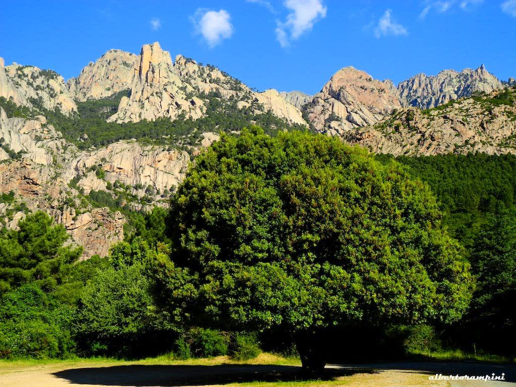 Punta Lunarda as background of a monumental Holm-oak tree