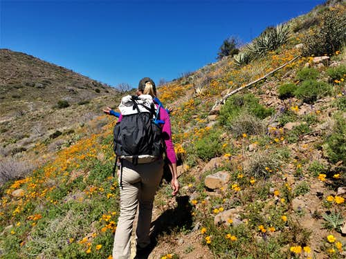Hiking up the Bronco Creek Trail, with flowers abound