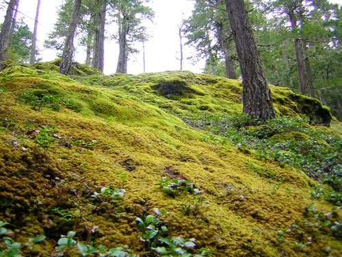 Mossy mountainside about...