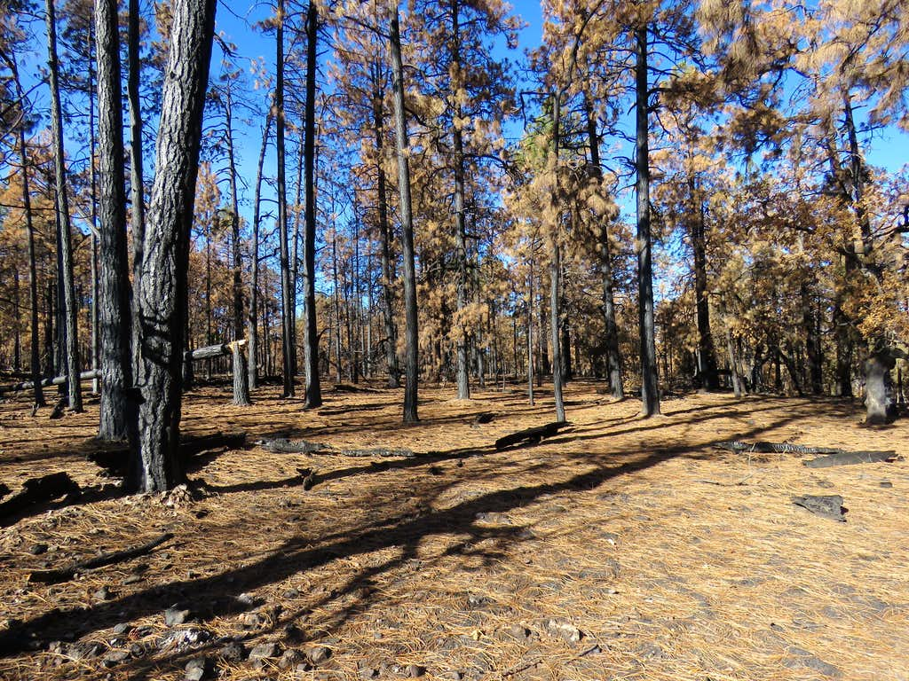 Hiking off trail on Secret Mountain