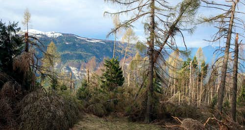 Damage caused by the wind in the woods of Trentino.
