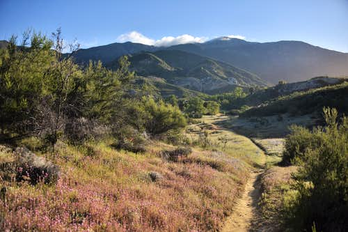L024- Morning View of Junipero Serra Peak
