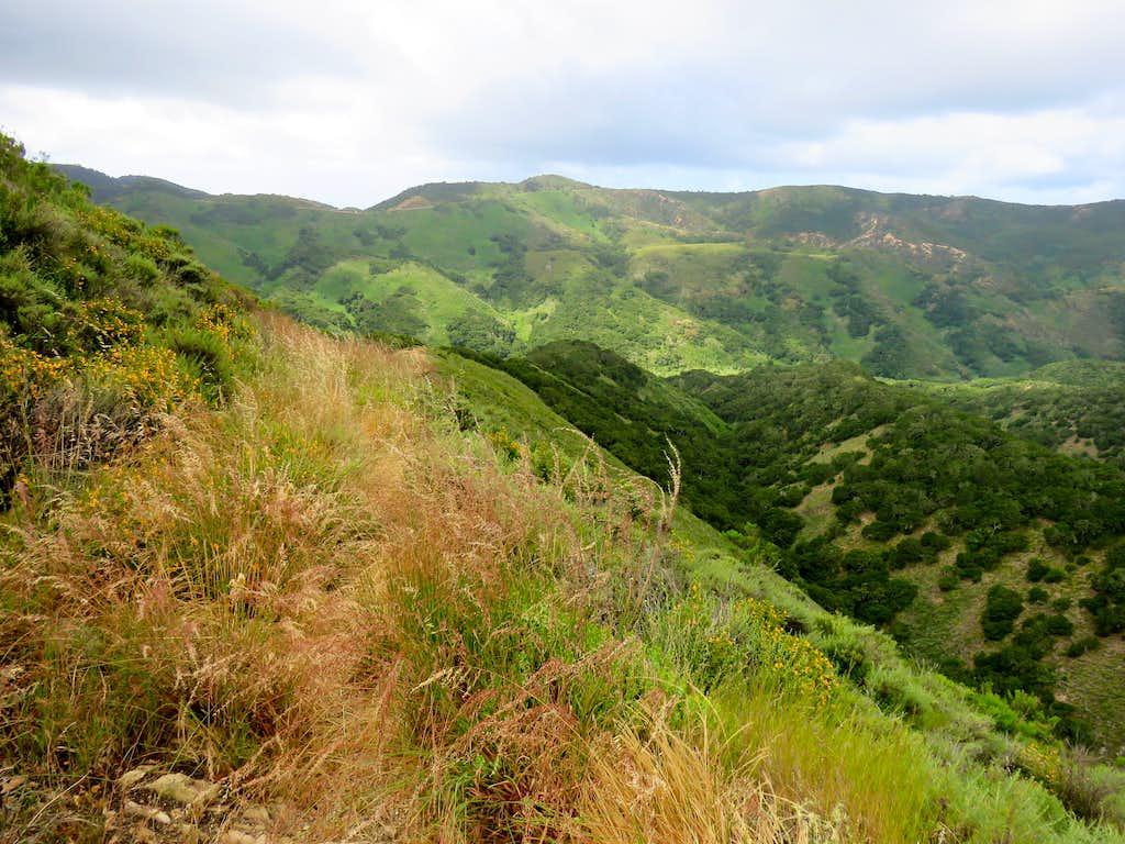 Descending into Coon Creek Canyon