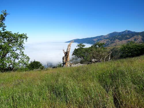 Cone Peak from Prewitt Ridge Trail
