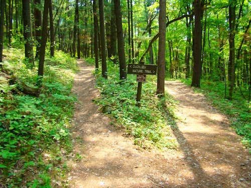 Castle Mound Nature Trail Fork