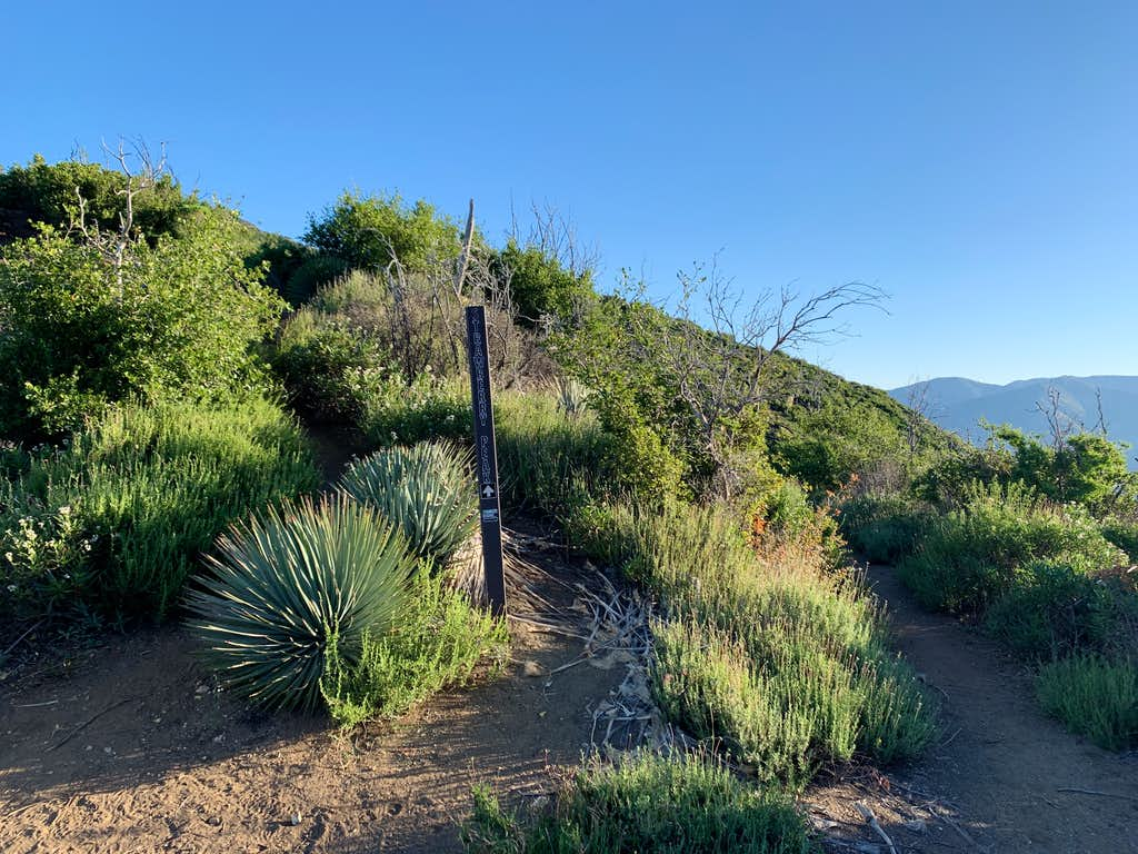 Strawberry Peak Trail Junction