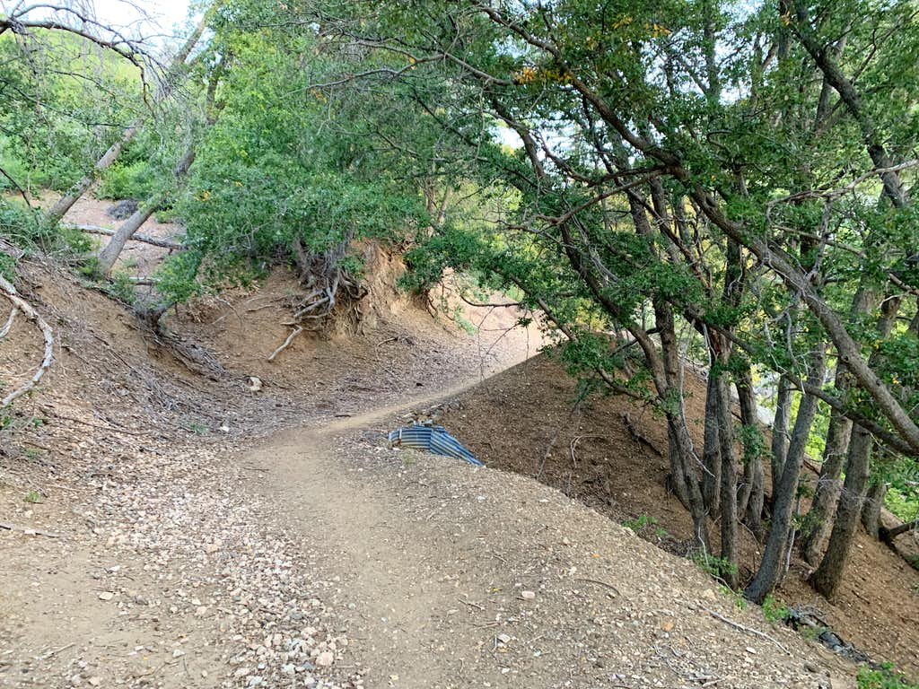 Lower Slopes of Strawberry Peak Trail