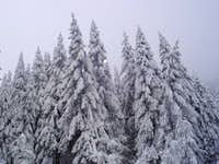 Winter in Romanian mountains