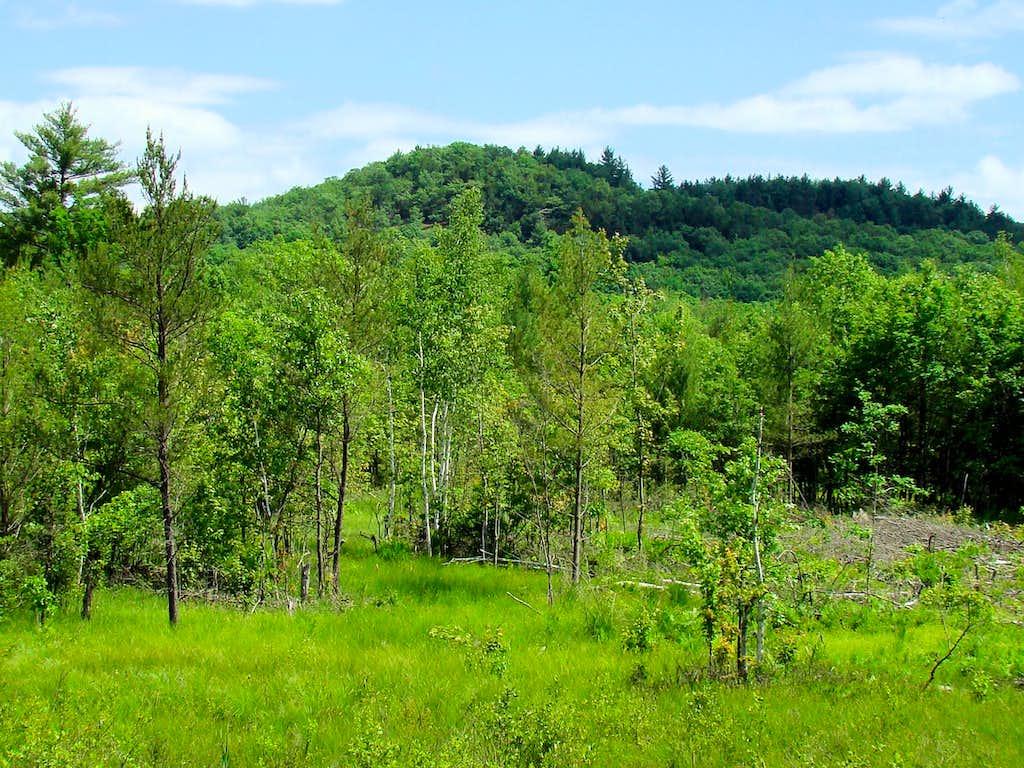 Levis Mound 1215
