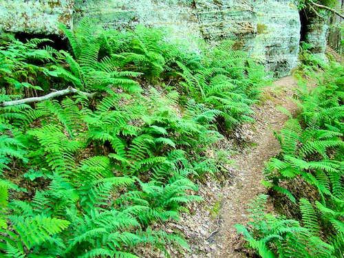 Levis Mound Ferns