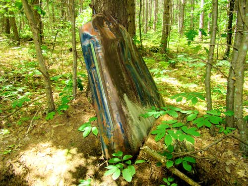 Levis Mound Forest Relic