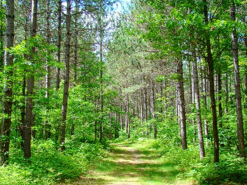 Pine Run Trail