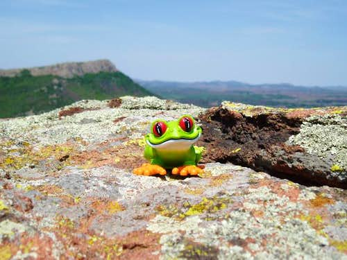 Jacko the Frog on the summit...