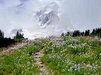 Flower beds at Paradise, Mt. Rainier