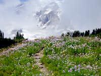 Flower beds at Paradise, Mt. Rainier