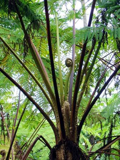 Giant ferns are everywhere.