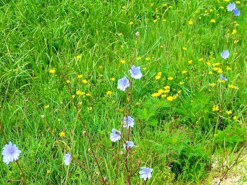 Blue Mound Summer Wildflowers