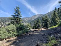 San Bernardino East Peak from John's Meadow Trail