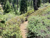 Condition of Unmaintained Section of John's Meadow Trail