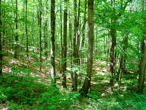 Flambeau Ridge Forest