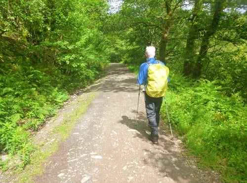 32. Ken on the Forestry trail