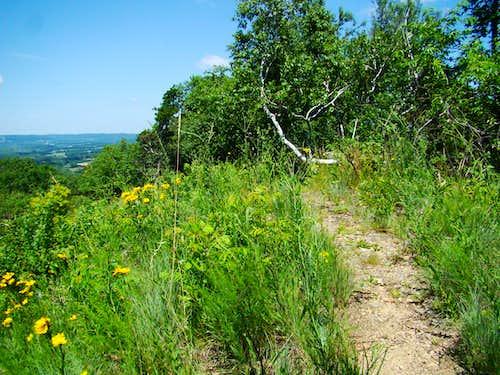 Summit Ridge on Reed's Peak