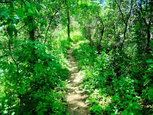 Trail Between Perrot Ridge and Reed's Peak