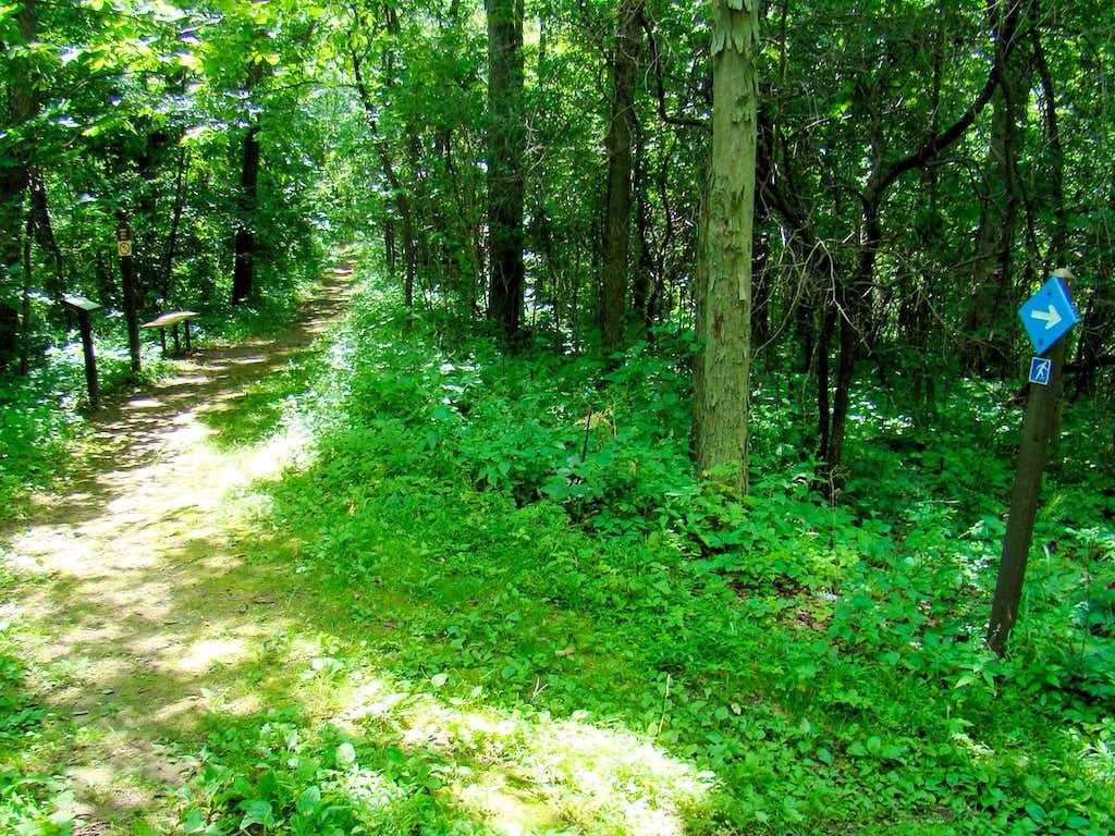 Reed's Peak Trail Junction