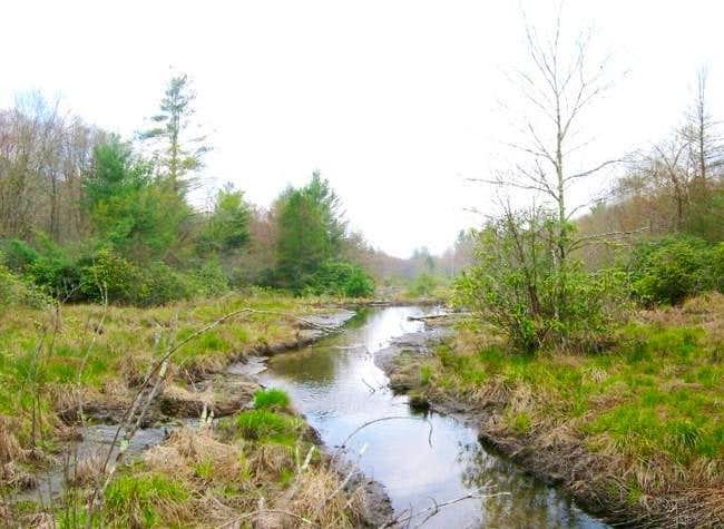 High elevation bog in the...