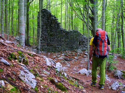 Torre Francesca, approach across the beech-wood