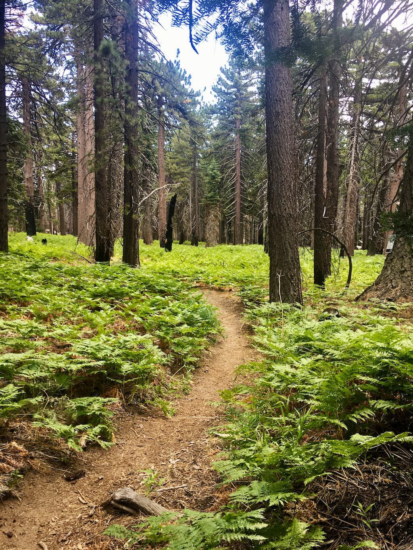 San Jacinto Fern Trail